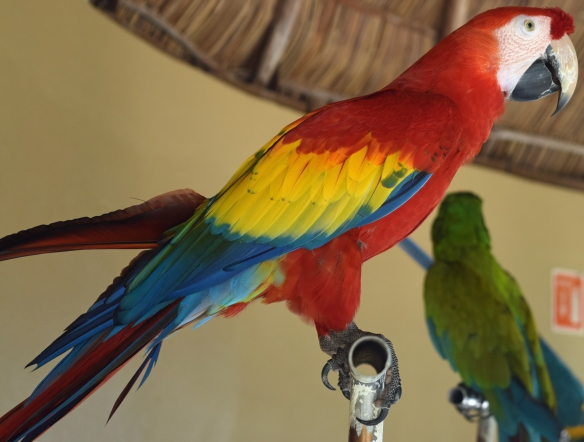Roy G. Biv, Macaw Style!